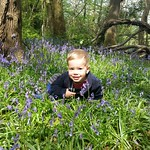 George playing in the bluebells