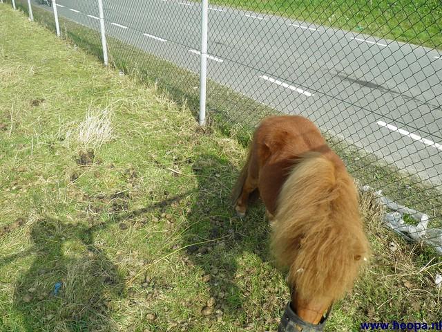 24-03-2012 rs'80 Bleiswijk 25 Km  (86)