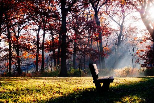 ray sunbeam sunrise daybreak mortonarboretum bench dawn