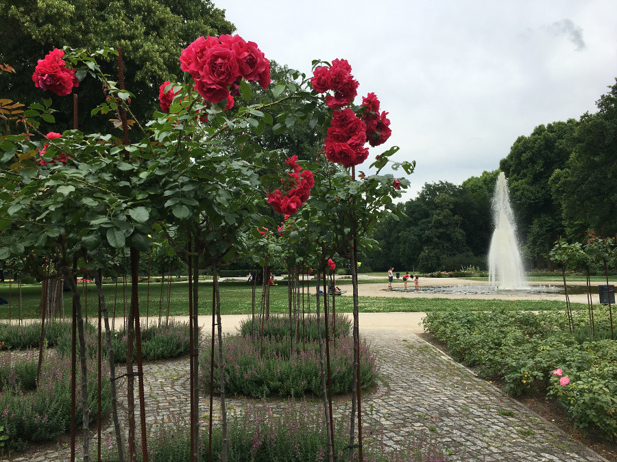 Ly, Cindy; Germany - FIVE - Flowers at Treptower Park