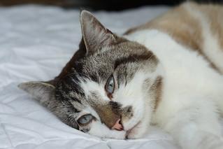 cat musti | by alpha77shooter