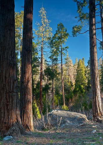 california winter mountains green forest landscape flora rocks pines idyllwild blueskies sanjacintomountains