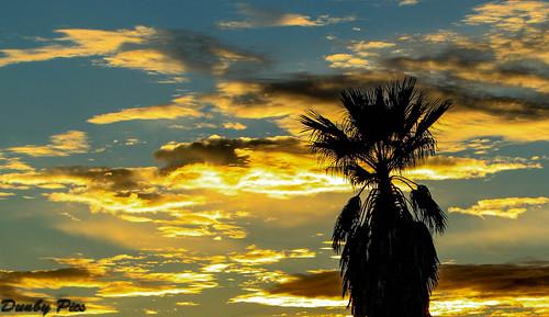 county sunset tree port sonoma parks palm petaluma regional