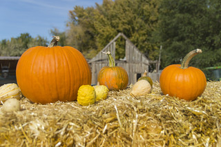 Classic Pumpkin and Squash Pose | by aaronrhawkins