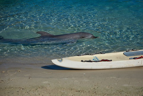 Gold Coast Seaworld | by georg_dieter