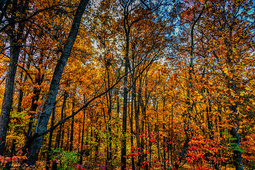 park county trees red orange usa color colour tree fall colors leaves yellow landscape virginia us leaf colours unitedstates american va fairfax northern parc centreville chantilly lawerence