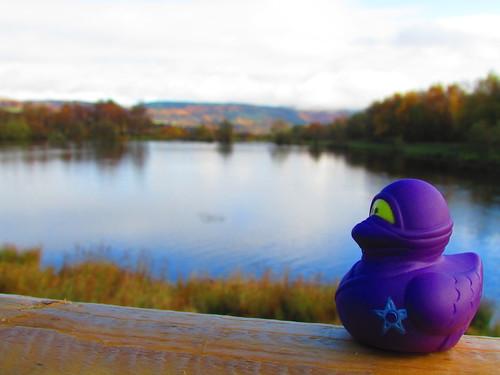 lake wales landscape pond bokeh aberdare darevalleycountrypark