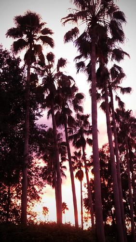 tampaflorida flickrandroidapp:filter=orangutan
