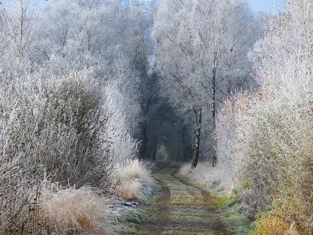 enchanted | frosty rime