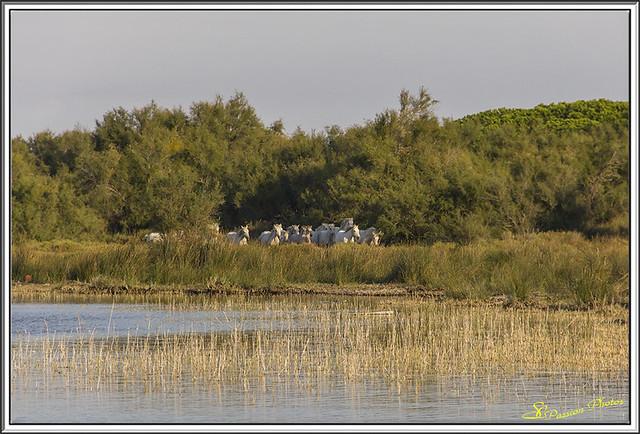 Galop dans le Marais (1)