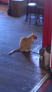 Dave Fat Cat Ipswich
