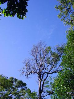 Gunung Datok: Atop