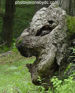 Gargoyl stump 04-1139 | by photovisionsbydc