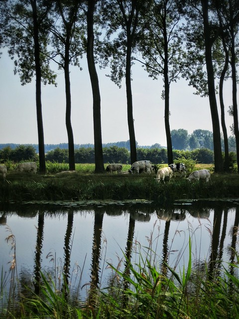 Along the Damme Canal between Bruges, Belgium and Sluis, Holland