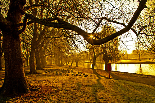 trees sun tree sunrise river bedford dawn twilight bedfordshire felton robertfelton theembankment thegreatouse