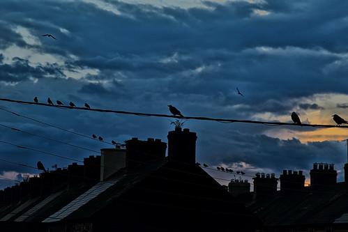 cork ireland streetshot streetscape sunrise silhouette rooftops dorameulman canon sky outdoor birds travelphotography