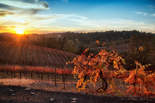 sunset color fall vineyard day winery clear placerville wtd boegerwinery obiewalks pwfall