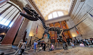 Dinosaur at the American Museum of Natural History | by donjd2