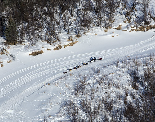 Aerial of dog sled team on Iditarod National Historic Trail between Kaltag and Unalakleet | by BLM Alaska