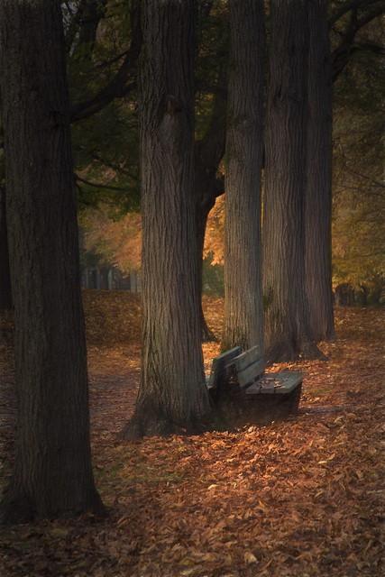 Happy Autumn Leaves Bench Monday!