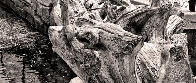 Weathered Tree Trunk--Harborside