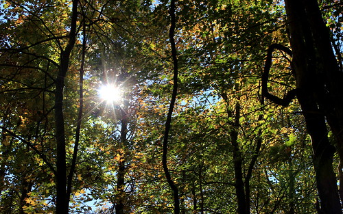 autumn trees sun forest