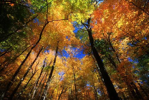 park county new york autumn lake color tree fall leaves state saratoga upstate moreau lakemoreauii