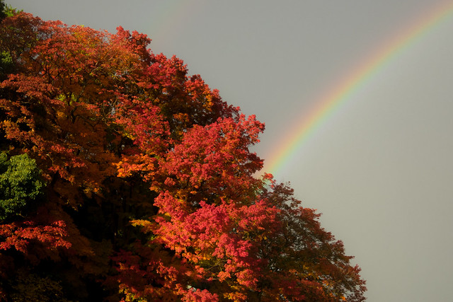 rainbow and red leaves