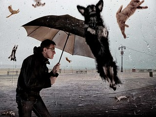 Raining Cats and Dogs | by David Blackwell.