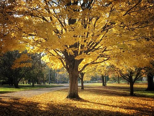 autumn afternoon fallfoliage indiana