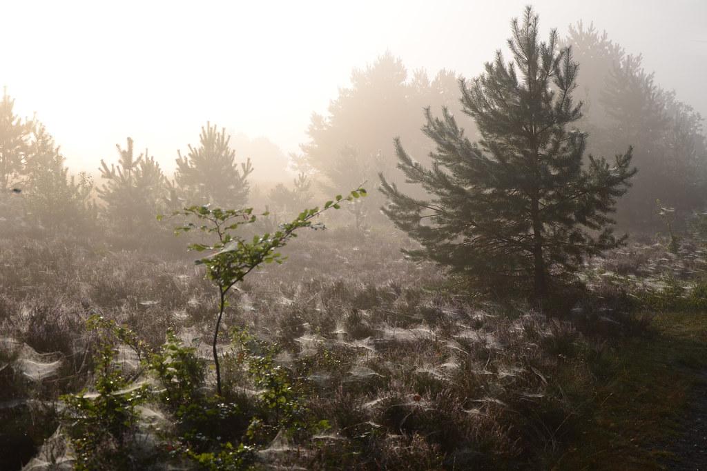 Field of webs