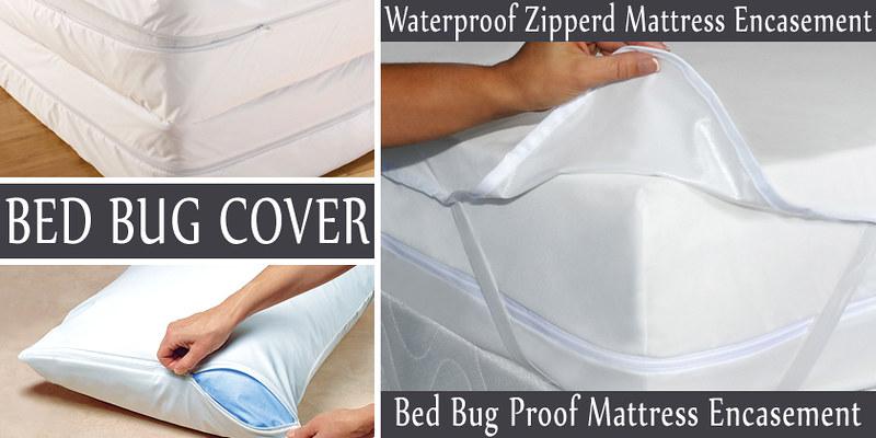 bed-bug-cover-slide