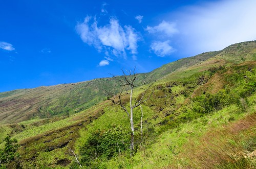 Climbing Mount Cameroon   by jbdodane
