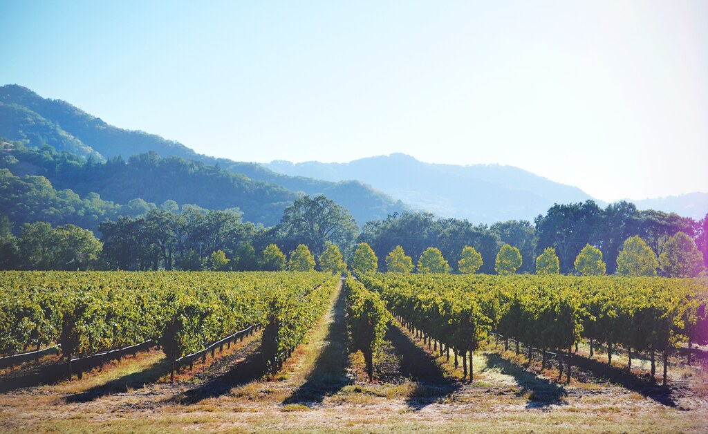 Wijnregio Napa Valley in Californië, Amerika | via It's Travel O'Clock