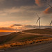 Wind farm by William C. Y. Chu