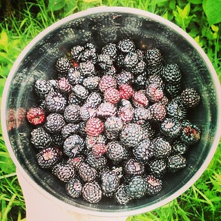 #wildblackraspberries | by brendantnloper