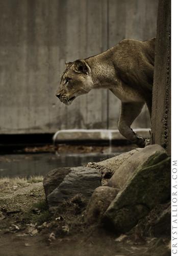 Zoo 01   by crystalliora ✦ vesper704