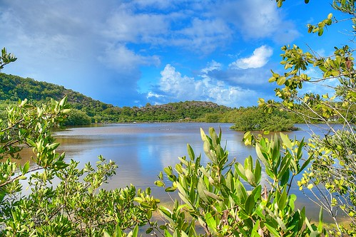 Galley Bay Nature Reserve (3) | by MikeAnderson