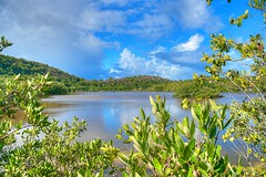 Galley Bay Nature Reserve (3)