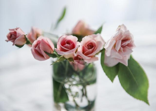 3796 ~ rosinhas de Santa Teresinha