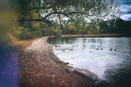 serene calm buckscounty federicoscotto fedesk8 landscape fujifilmxm1 lake foliage nature surreal