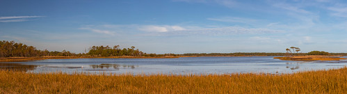 foliage wildlife landscape ponds lakesky nature scenic wildlifearea gulls outdoor panorama fall gordonpond clouds rehobothbeach delaware unitedstates us