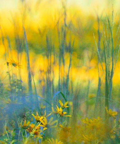 avalonpreserve wildflowers meadow headoftheharbor