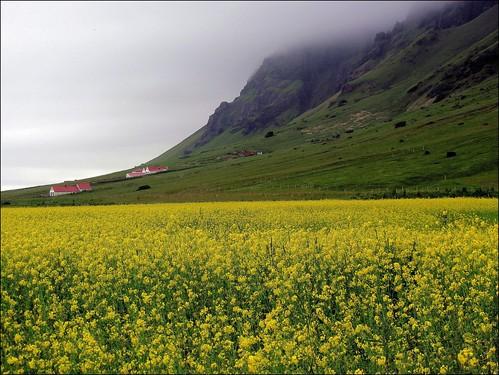 flowers sky mountain verde green field yellow clouds iceland nuvole giallo cielo campo fiori montagna islanda eyjafjallajökull