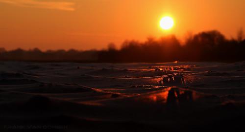 montfort limburg sunset frost winter vegatables protected holland sundown europe canon6d gps preiveld leek crop cropped topf100 topf200 krumpaaf mrtungsten62 interesting interestingness frnk ƒr㋡ηk pinterest