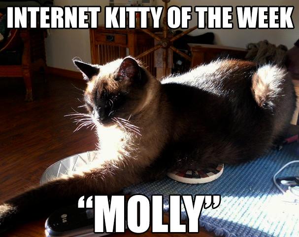 Molly-sun Molly Sun