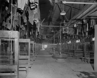 View showing miners' clothes suspended by pulleys... / Photo montrant les vêtements des mineurs suspendus à l'aide de poulies...