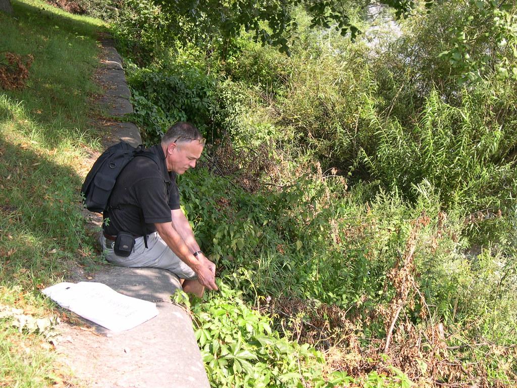 Botaniker an der Donau