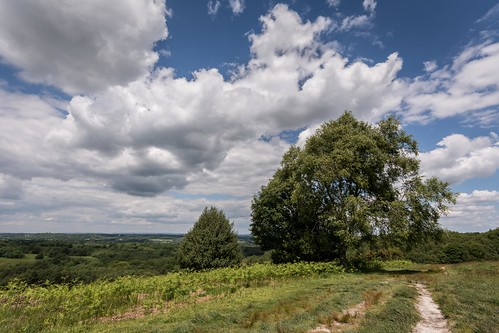 england tree clouds spring nikon solitude track alone peace view path trail viewpoint eastsussex ashdownforest lr6 sigma1020f456 d7100