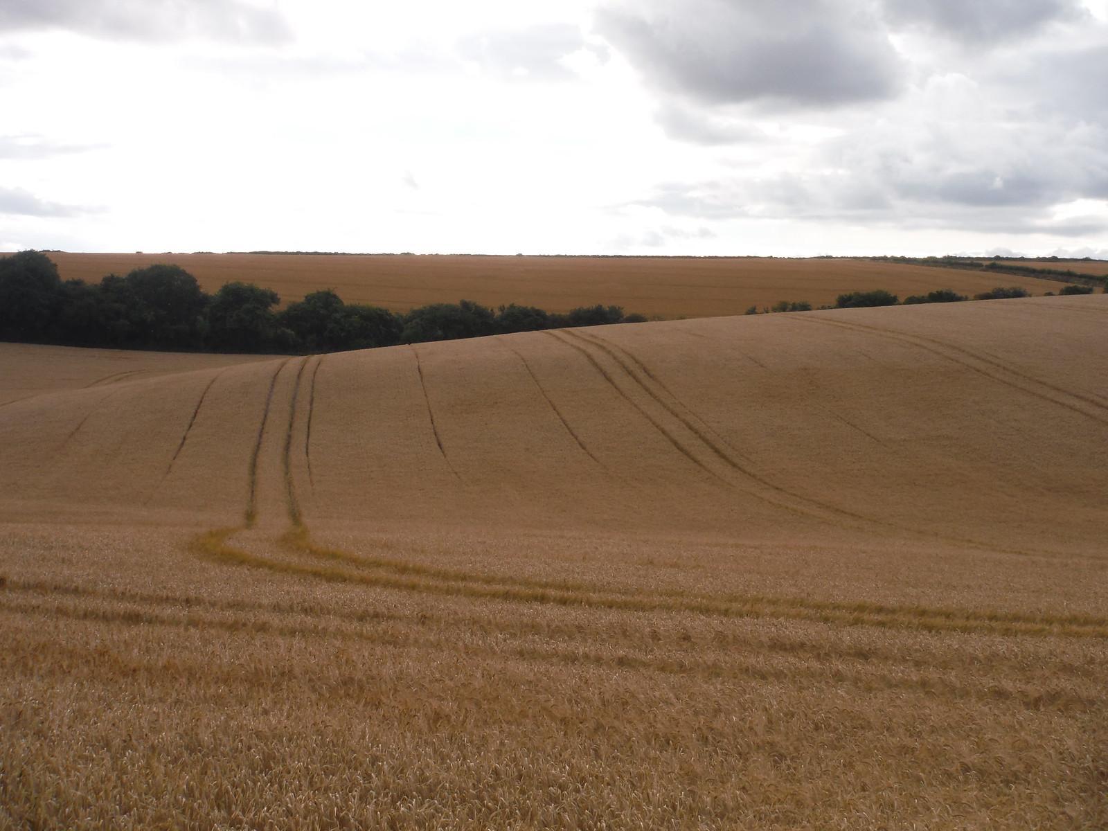 Fieldscape SWC Walk 254 Salisbury Circular